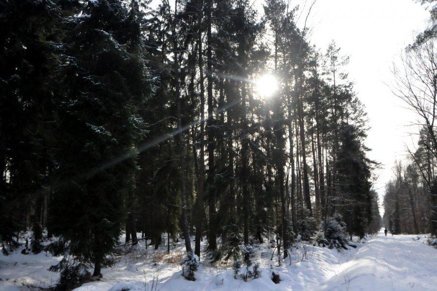 Puszcza Dulowska w zimowej scenerii przyciąga sporo ludzi (WIDEO, ZDJĘCIA)