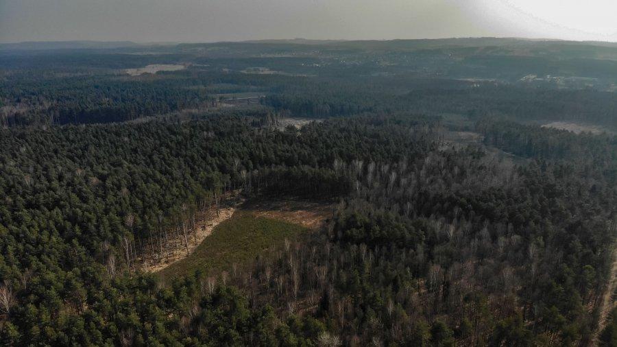 Apel do premiera Morawieckiego: Trzeba zaprzestać wycinki drzew w Puszczy Dulowskiej