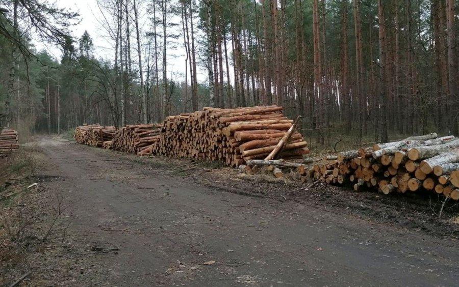 Władze powiatu apelują do leśników, by nie wycinali całych połaci lasu