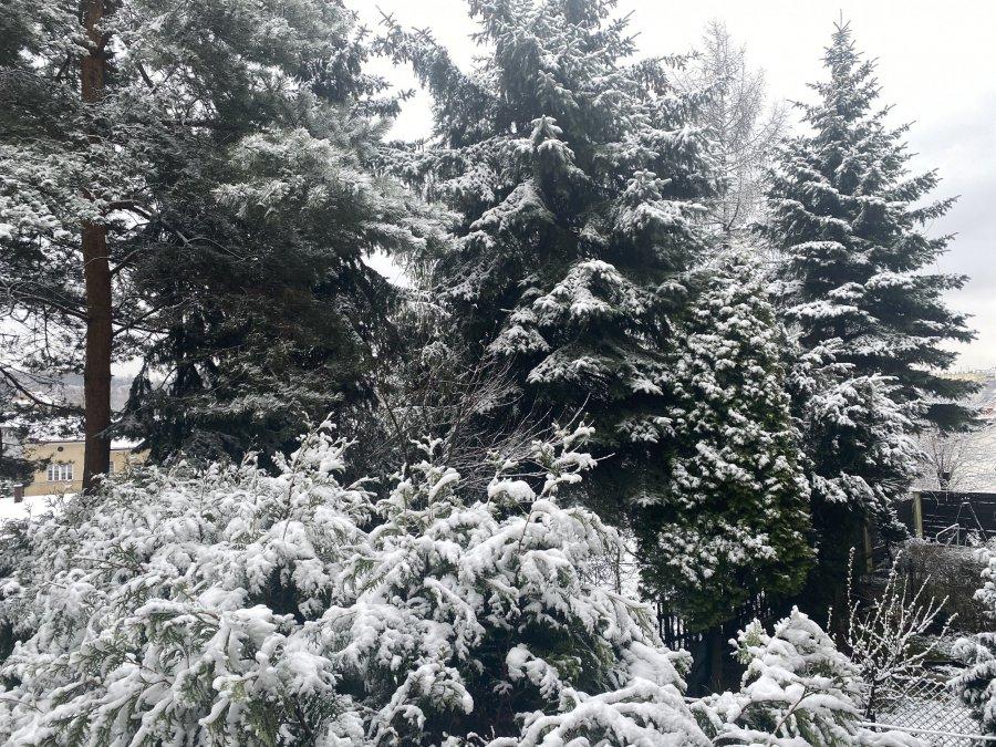 Za oknami zimowo. Kiedy wreszcie zrobi się cieplej?