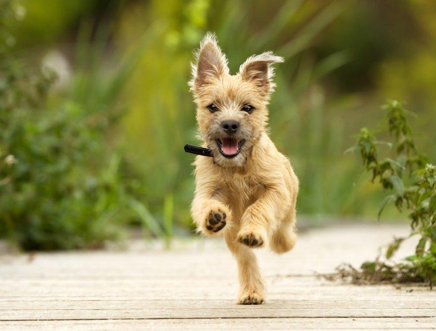Karmienie szczeniaka – jak robić to dobrze?