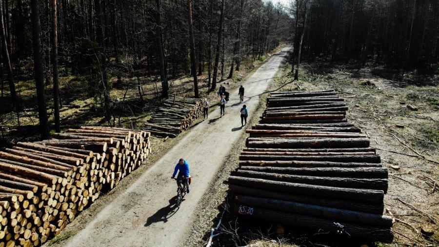 Zatrzymać rzeź drzew. Trwa protest przeciwko wycince w Puszczy Dulowskiej (ZDJĘCIA, WIDEO)