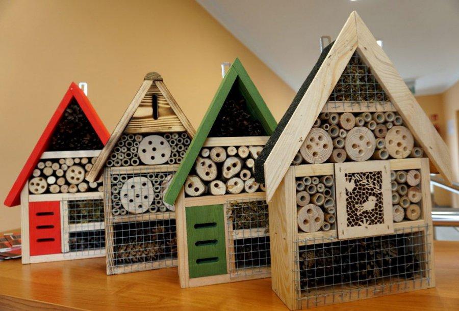 Kolorowe domki dla owadów trafiły do szkół i przedszkoli