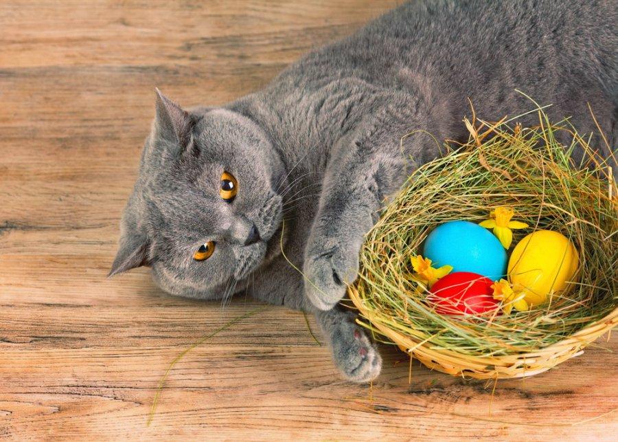Jajko dla kota – czy to dobry pomysł?