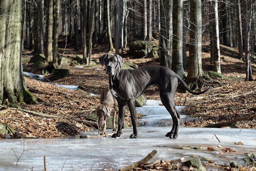Chudy pies – choroba czy rasa?