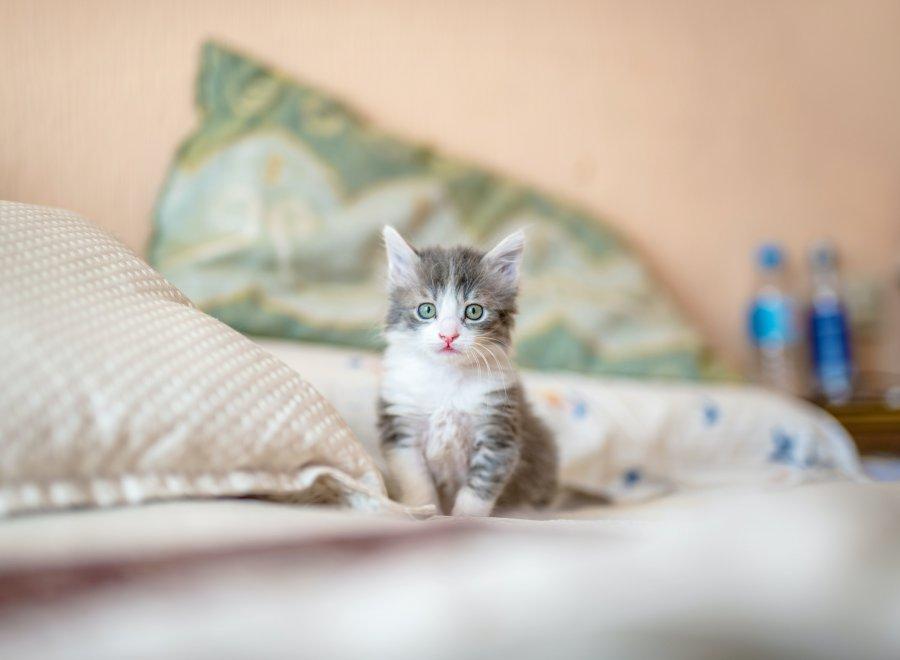 Mój kot w kłopotach – jak uspokoić kota? Środki na stres, które warto mieć w apteczce
