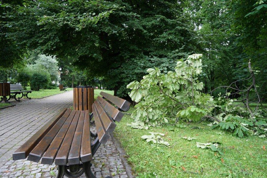 Jak po kilku dniach od nawałnicy wygląda Park Miejski w Chrzanowe? (ZDJĘCIA)