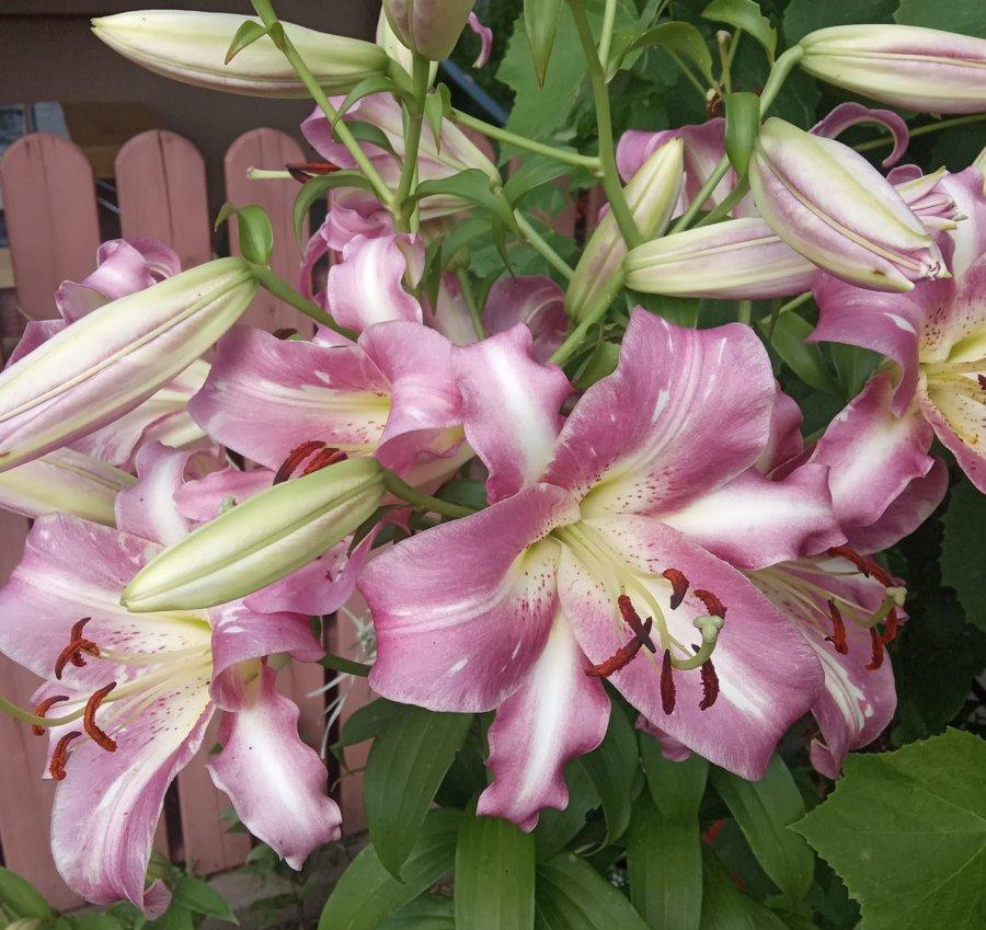 Pełnia lata w Przełomowych Ogrodach. Obejrzyjcie te piękne kwiaty (ZDJĘCIA)