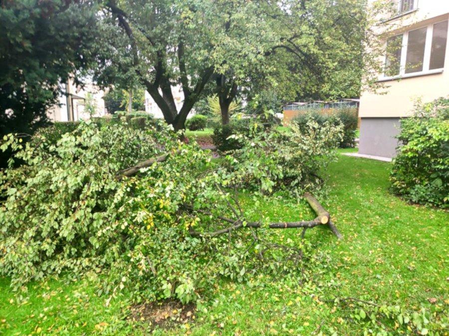 Ktoś nielegalnie obciął część drzewa. Konary zostały porzucone obok