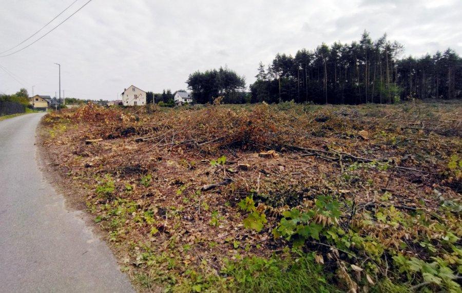 Las poszedł pod topór w gminie Chrzanów. Zaniepokojeni mieszkańcy pytają, co dalej