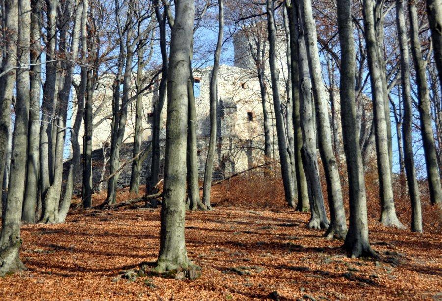 Wybierz się na jesienny spacer, zrób zdjęcie i wygraj nagrody