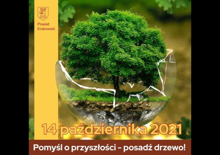 Każdy może otrzymać dwie sadzonki drzew. Wystarczy po nie przyjść